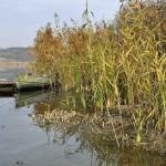 Sacalaia-Lacul Stiucilor