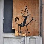 Pisica neagra in usa